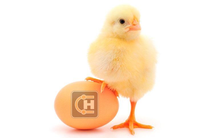 Hydroscand-egg.png